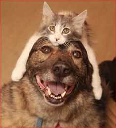 Dogs and cats are such wonderful friends and companions... Love, Love, Love 'Em...