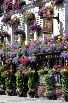The Churchill Arms pub on Kensington Church Street covered in Summer flowers