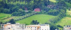 Ancona, Marche, Italy - Trees in the countryside- miniature7 - by Gianni Del Bufalo CC BY-NC-SA by gianni del bufalo