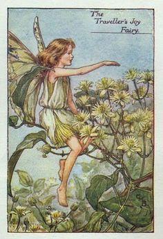 The traveller's joy flower fairy - Fata della clematide