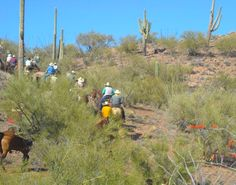 Pantano Riding Stables - Tucson, Arizona Choose your style of ride! Whether it's a Wagon, Dinner, Sunset, Trail, or a National Park Ride - there's something for every skill level of rider!