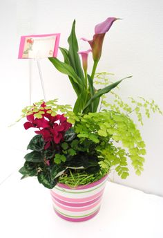 Valentine's Day arrangement with Calla Lilies, Maiden Hair ferns and Cyclamen. How amazing would it be to come home to this on your table, ladies?