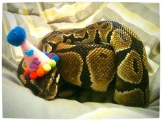 Vamers - Ermahgerd - Forget Snakes on a Plane, It Is All About Snakes Wearing Hats - Party Hat Snake