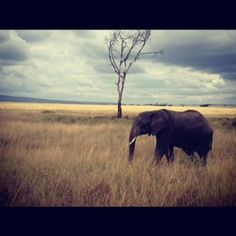 Exploring The Serengeti