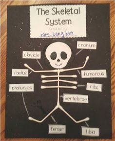 Q-Tip Skeleton-Fun way to teach the main bones in the human body FREEBIE!