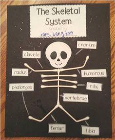 Q-Tip Skeleton-Fun way to teach the main bones in the human body FREEBIE!