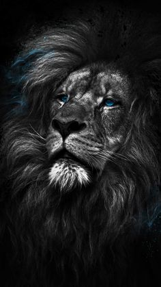 King of the Jungle iPhone Wallpaper - iPhone Wallpapers