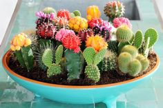 Mixed Cactus Seeds - Grow your own decorations! Specifications: Product Type: Bonsai Size: Small, Medium Style: Perennial Full-bloom Period: Summer Use: Outdoor Plants Variety: Cactus Type: Blooming Plants Seed bags only, pots not included. Succulents Tumblr, Cacti And Succulents, Planting Succulents, Succulent Centerpieces, Succulent Arrangements, Succulent Terrarium, Succulent Care, Succulent Ideas, Wedding Centerpieces