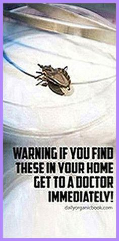 According to the Centers for Disease Control and Prevention, a deadly bug has been reported in southern regions of the United States. Even though the bug looks harmles Natural Life, Natural Living, Natural Healing, Holistic Healing, Holistic Remedies, Health Remedies, Natural Remedies, Health Guru, Health And Nutrition