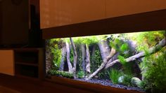Tank is decorated with Aquadecor model and with pieces of non-floating root pieces. 75 Gallon Aquarium, Home Aquarium, Tropical Aquarium, Aquarium Lighting, Aquarium Design, Saltwater Aquarium, Aquarium Fish Tank, Planted Aquarium, Freshwater Aquarium