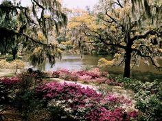 South Carolina beauty.