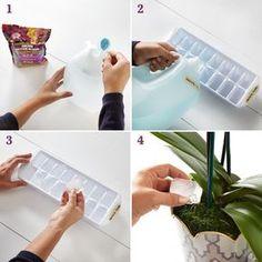 Sencillo truco para regar correctamente tus orquídeas