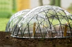 How to make a cloche for seeds
