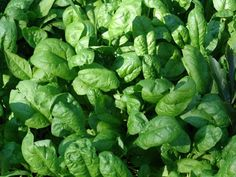 Sources of Vegan Protein   Part II - Vegalicious