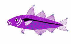 Haddock fish