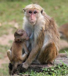 Lactation in the Animal Kingdom | Animals Zone