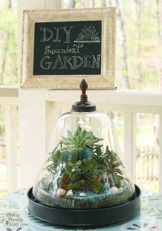 Hey all you black thumb peeps! I have a gardening tutorial for you. This desktop succulent terrarium is hard to kill. It requires very little water and loves to be neglected. Garden Terrarium, Succulent Terrarium, Terrarium Ideas, Gold Terrarium, Container Plants, Container Gardening, Succulents Garden, Planting Flowers, Diy Desktop
