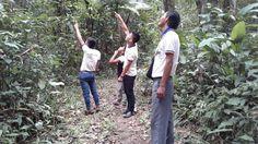 San Pedro De Manati- 2017- Ornithology and Medicinal Plants of the Amazon -Bird watching