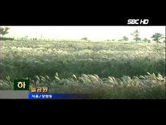 하늘공원 가을 억새(서울1TV)