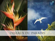 La Polynésie française est un vaste territoire offrant une faune et une flore splendide, à contempler sans modération !! http://www.etahititravel.pf/