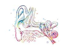 Throat Anatomy, Fragile Label, Human Ear, Slam Poetry, Doctor Gifts, Medical Art, Illustrations, Free Prints, Artist Names