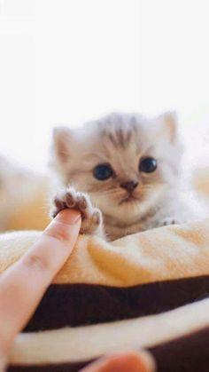 Babycat-Highfive *_*
