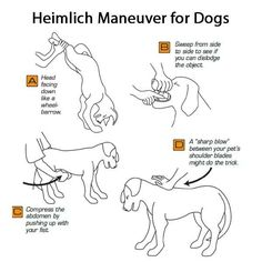 """Heimlich Maneuver for pets? Then take your pet directly to the Vet. Please this pass on! Heimlich Maneuver For Dogs, Dog Heimlich, First Aid For Dogs, Dog Hacks, Pet Health, Dog Health Tips, Health Care, Dog Care, Horse Care"