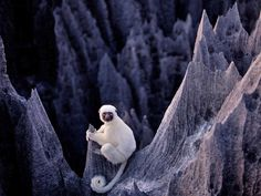 tsingy de bemaraha national park - Buscar con Google