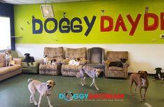 Daycare hangout from last week! #dogs #dognap #doggydaycare #instadog #doggydaydream