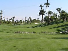 Modern Oasis - #Palm_trees adorn a lush #green golf course located in the desert city of Las Vegas, Nevada, adding texture and variety to the well-maintained #landscape.