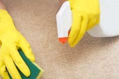 This is a guide about cleaning carpet stains. While a very durable floor covering, carpets get stains on them from time to time.