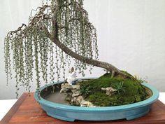 Llorando paisaje penjing (con zona de agua) pequeñas plantas proporcionales completan la escena de relajación