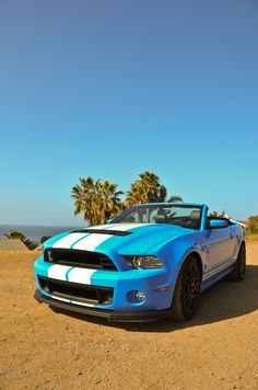 Since Ford and Shelby decided to collaborate in the the Shelby Mustang has been an iconic and constant part of car history. 2013 Shelby Gt500, Ford Mustang Shelby, Mustang Cars, Ford Mustangs, Blue Mustang, Love Car, Car Car, Driving Test, Hot Cars