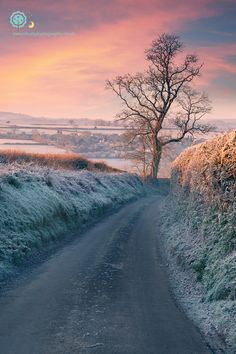A frost dawn in Somerset, UK