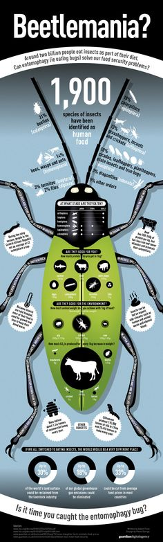 Learn more about edible insects for survival and the benefits of eating bugs! | #survivallife www.survivallife.com