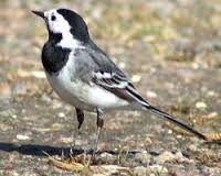 Image result for garden birds uk