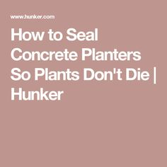 How to Seal Concrete Planters So Plants Don't Die   Hunker