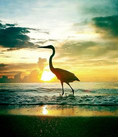 A Heron Stands Tall...photographed on Ft Lauderdale Beach using iPhone4 by the FtLauderdaleSun.