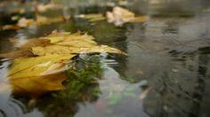 Street puddle, rain drops falling on leaves
