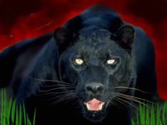 My favorite animal of all. I used to have a poster with a Black Jaguar that said Trust Me.
