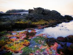 Such vibrant colors! The tide pools are a must when you're in Laguna. :)