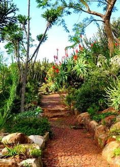 fynbos gardens in cape town - Google Search
