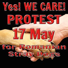 Yes we Care Protest 17 May  #Tierschutz #Tiere  #Tierrettung  #Rumänien #Notfall #Strays #Tierheim #Shelter #Europa #EBW #StopKillingDogs