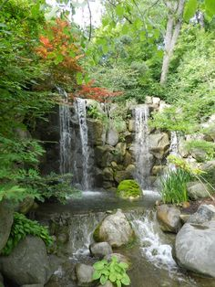 The #1 Japanese Garden in the U.S.?