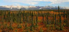 The Northwest Territories (NWT) Parks offer a safe, welcoming, and comfortable camping or day-visit experience. Northwest Territories, Travel And Tourism, Queen Elizabeth, Parks, Explore, Parkas, Exploring