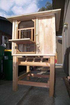 Pigeon Loft Design, Pigeon House, Birmingham, Bird Feeders, Zombies, Box, Birds, Home Decor, Ideas