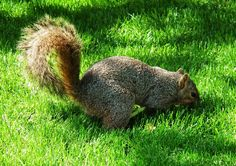 Squirrel! By Kristine Euler