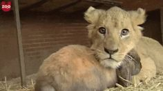 Bunny and Lion Cub