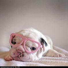 Cyoot Puppeh ob teh Day: Ai Habs da Bad Eyesight - Loldogs, Dogs 'n' Puppy Dog Pictures - I Has A Hotdog!