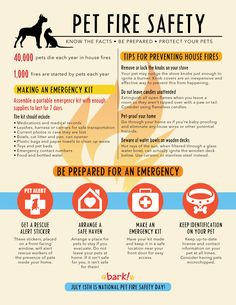 Today is National Pet Fire Safety Day and it is part of our 101 Days of Summer Safety.   More: http://mcfrs.blogspot.com/2016/07/not-your-average-dog.html